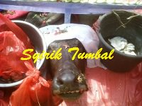 syirik_tumbal_sembelihan