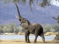tafsir_surat_al_fiil_gajah