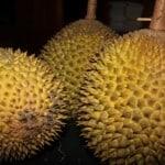 Benarkah Durian Haram Karena Mengandung Alkohol?