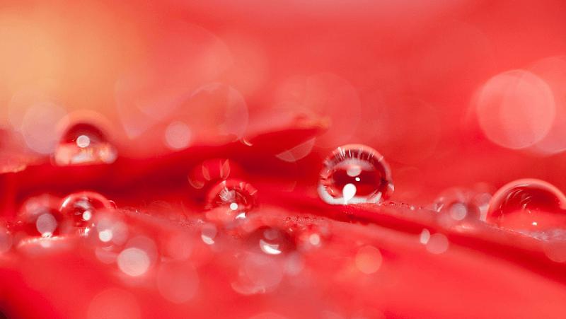 haidh_darah
