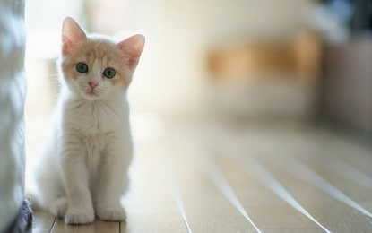 Apakah Kotoran Kucing itu Najis?