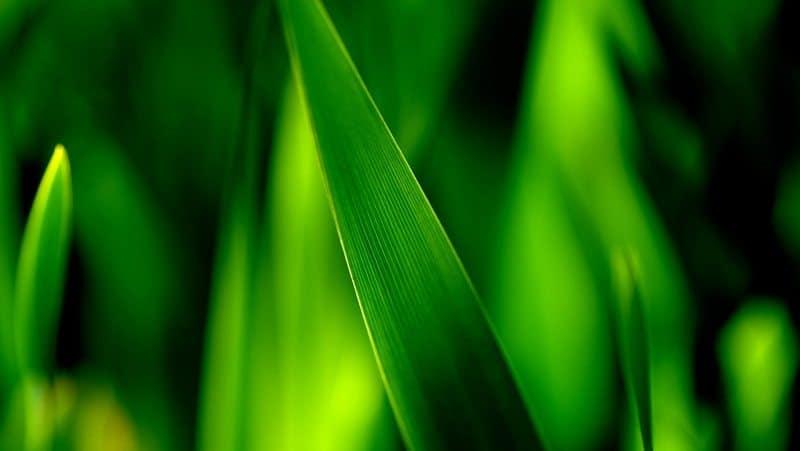 surga_hijau
